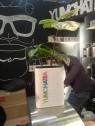 Tea Moments: Yumchatea op Amsterdam Coffee Festival